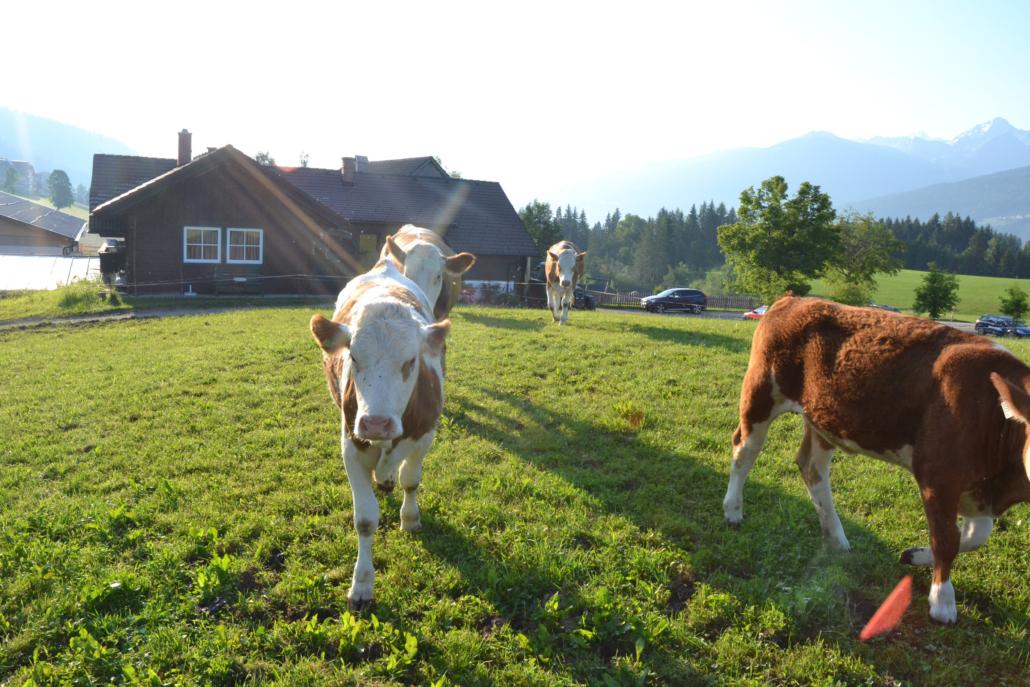 Rhythmus am Bauernhof im Urlaub miterleben, Bacherhof