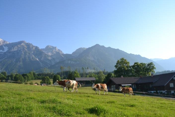 Landleben am Bio Bauernhof Bacherhof - staunen und entdecken