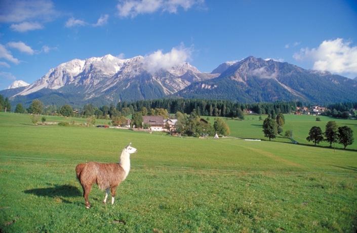 Erlebnisurlaub in Ramsau am Dachstein, Bacherhof