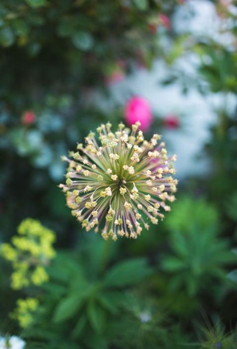 Bio Bauernhof Bacherhof Blumen