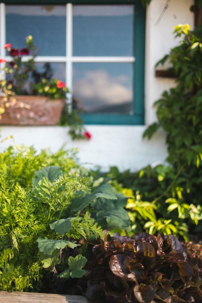 Bio Bauernhof Bacherhof Salat